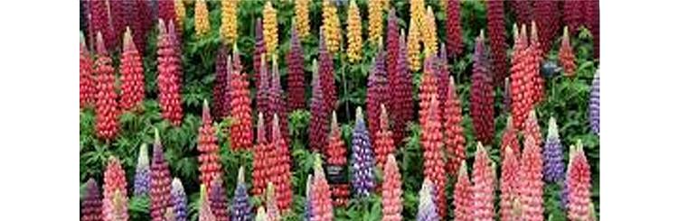 chelsea Flower show 1