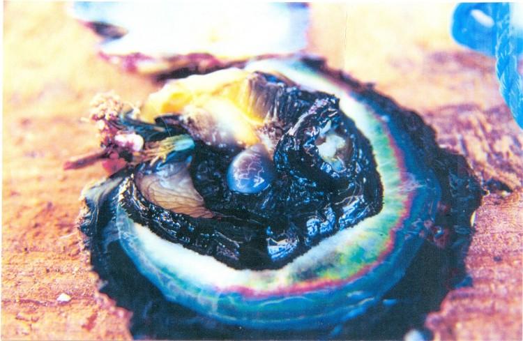 Pearl Birth